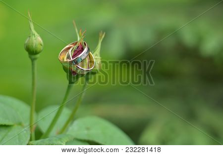 Golden Wedding Rings On A Small Tender Rose. The Concept Of A Wedding. Ornaments. Fresh Flowers. Flo
