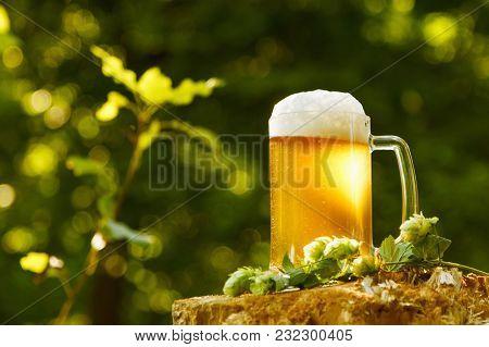 Beer Mug With Hops On Outdoor Background Nature. Festival Oktoberfest.