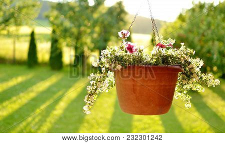 Beautiful View Of The Hanging Flower Pot And Trees Casting A Long Shadows In The Background On A Sum