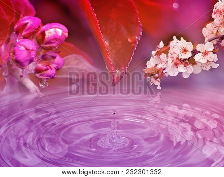 Impact Of Drop Trickling From The Leaf And Apple And Cherry Branches. Pink, Purple Stylized Wallpape