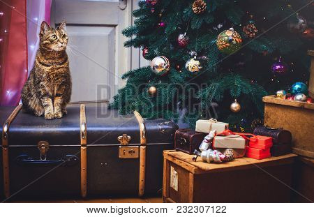 Cat At Home Sitting On A Suitcase Beautiful Christmas Background With A New Year Daccor, Presents An