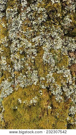 Close - Up View Of Bark Of Moss Tree