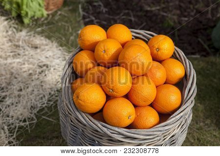Oranges In A Wicker Basket On The Grass