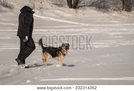 Dog  On A Snow Field In Winter