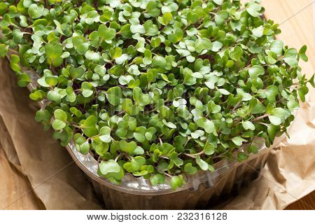 Young Microgreens In A Container On A Table