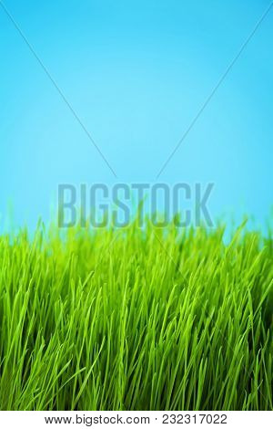 green grass meadow and blue sky