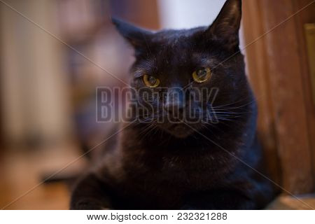 Portrait Of Black Cat With Yellow Eyes At Home.