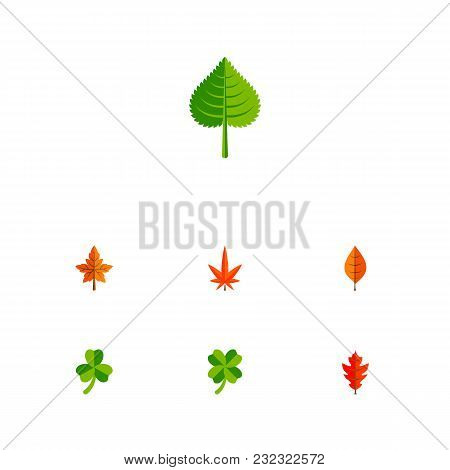 Icon Flat Leaves Set Of Foliage, Leaf, Alder And Other  Objects. Also Includes Leaf, Foliage, Hickor
