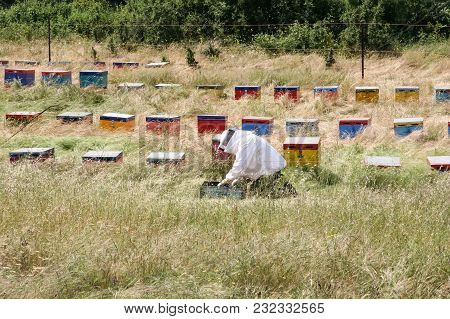 Summer Is A Time To Collect Honey. Apiary In Greece