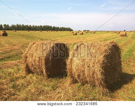 Agricultural Field. Round Bales Of Dried Hay In The Field Against The Blue Sky. Grain Crop, Harvesti