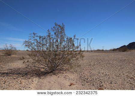 Larrea Tridentata, Creosote Bush In California Desert O A Sunny Day With Blue Sky And Brown Sand.