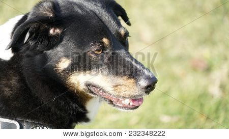 A Headshot Of A Dog During A Sunny Day.
