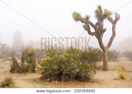Foggy Day At Joshua Tree National Park In Southern California