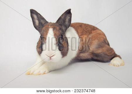Nervious Little Bunny Ready To Run Or Defence Himself On White Background