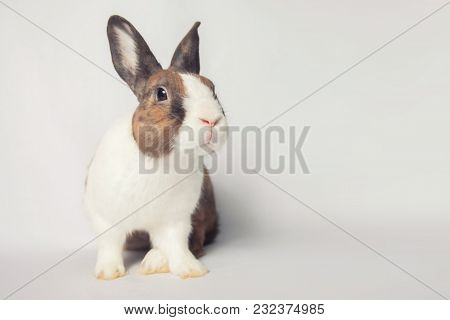 Beautiful Bunny With A Broad Charming Smile