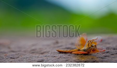 Dragonfly Lying Dead On The Stone Floor.animalia