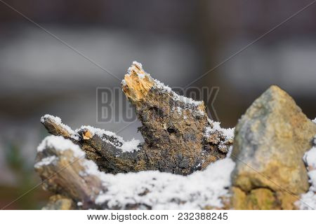 A Root Of Wood In The Snow With Soft Bokeh