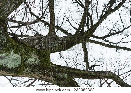 Tree With Grey Sky In Winter Low Angle View