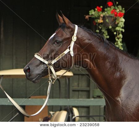 Woodward Stakes Winner