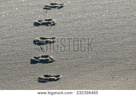 Dune - Traces Of Animals On The Sand