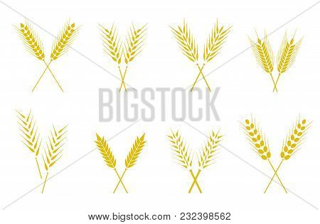 Set Of Simple Wheats Ears Icons And Wheat Design Elements For Beer, Organic Wheats Local Farm Fresh