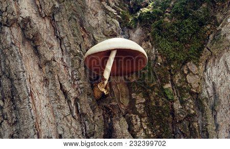 Mushroom On The Tree,mushrooms On A Tree,mushrooms Closeup
