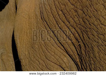Big Elephant In South Africa