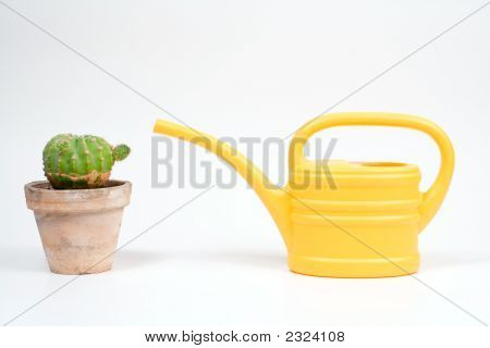 Watering Can And The Cactus