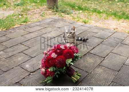 One Stray Cat Sneaks Up To The Red Wedding Bouquet From Dahlias Lies On The Wooden.