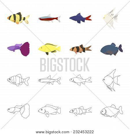 Botia, Clown, Piranha, Cichlid, Hummingbird, Guppy, Fish Set Collection Icons In Cartoon, Outline St