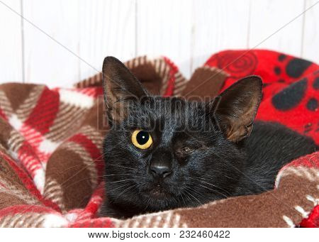 Small Black Kitten With Traumatic Injury To Left Eye, Eye Missing, Crusted Closed With Yellow Exudat