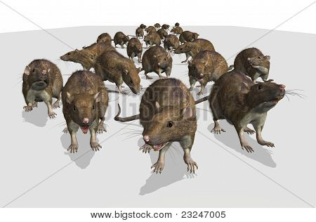 Army Of Rats