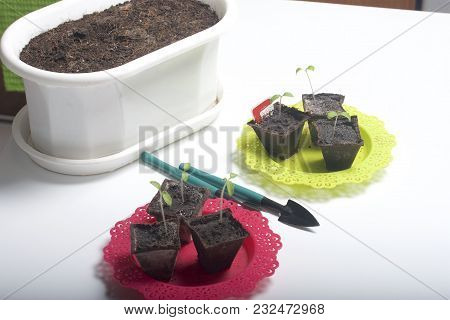 On The Table Is A Seedling In Peat Containers. Also, A Pot Of Soil To Which Transplants Need To Be T