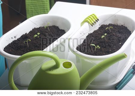 On The Table Is A Seedling In Containers. Nearby There Is A Watering Can For Irrigation And Tools.