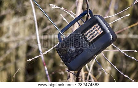 On The Branches Of The Tree Hangs A Small Radio On Batteries During A Picnic In The Woods.