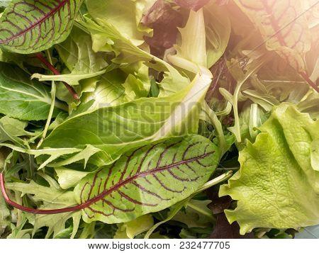 Fresh Spinach Leaves And Green Arugula Salad Rocket, Arugula Green Natural Background.