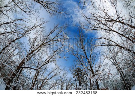 Trees Soft Focus Forest Woods Landscape Wide Background Wallpaper Green Sky Clouds Silhouettes