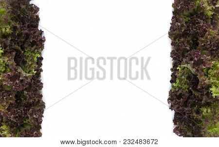 Top View. Lettuce At Border Of Image With Copy Space For Text. Red Lettuce On White Background.
