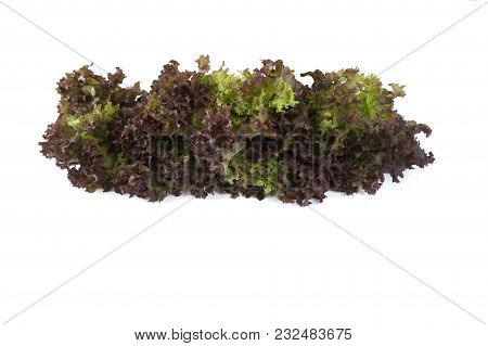 Top View. Lettuce At Border Of Image With Copy Space For Text. Red Lettuce Isolated On A White Backg
