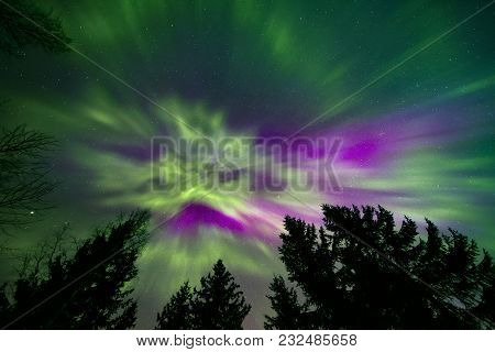 Colorful Northern Lights And Silhouettes Of Treetops