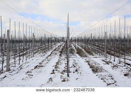Fruit Orchard In Winter Season, The Beautiful Weather Looks Nice