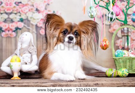 papillon, dog butterfly and  easter eggs