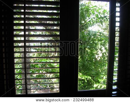 A Beautiful Window View To Tropical Trees