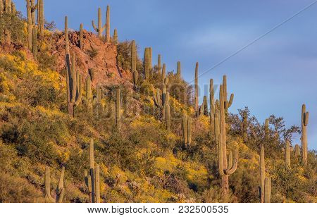 A Scenic Landscape Of Spring Wildflowers In The Arizona Desert