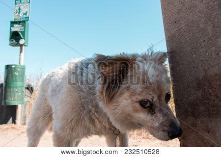 Cute Dog At The Beach Looking Curious