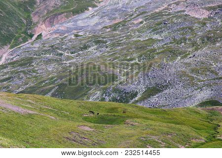 Wild Mountain Valley With Grassy Slopes And Rocks. View From A Height. In The Alpine Meadow, A Herd