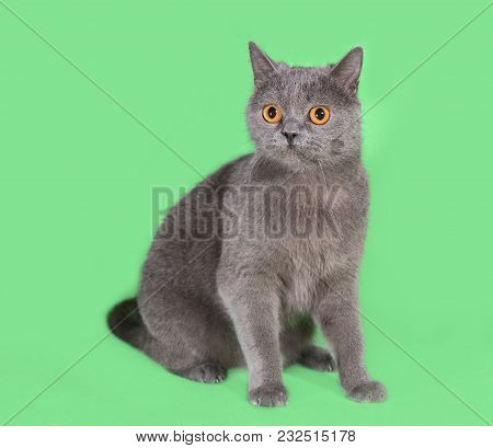 Beautiful Smoky Gray British Cat On A Green Background