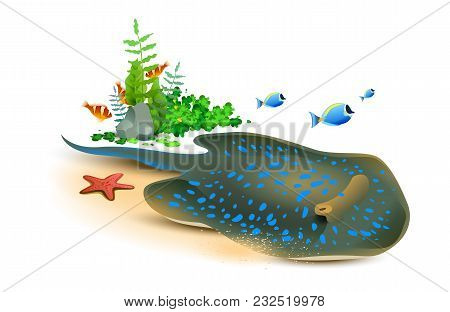 Electric Stingray, Starfish And Fish Underwater World. Isolated On White Vector Cartoon Illustration
