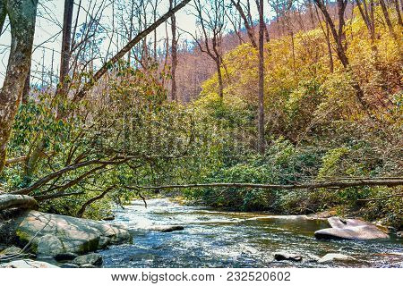 A colorful river landscape of fallen trees, bushes, and bubbly white water.