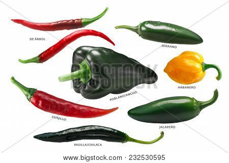 Mexican Chile Peppers, Paths
